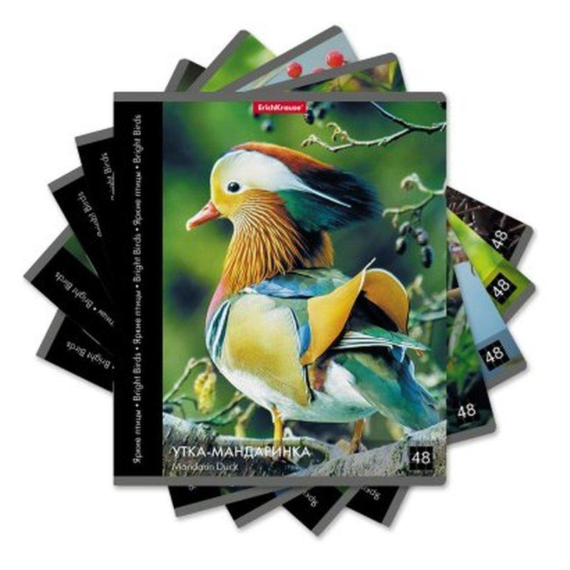 Тетрадь общая ученическая ErichKrause® 48 листов в клетку. Яркие птицы, 49637